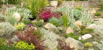 landscaping with drought tolerant plants today s homeowner
