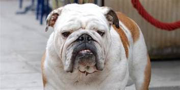 Dog Heres What Popular Dog Breeds Looked Like Before And After