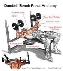 what are the benefits of bench press what is the difference between using a barbell or a dumbbell for incline decline flat chest