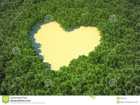 The Clearing shaped clearing in a forest stock photos image
