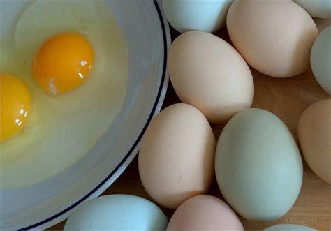 alimenti contenenti colesterolo gli alimenti con colesterolo quali sono e quali evitare