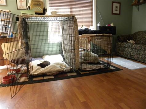 puppy howling in crate how to stop puppy whining and howling when crate aussiedoodle and