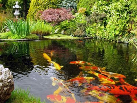 Alternatives To Grass In Backyard Planning Amp Ideas Koi Pond Construction Plans Koi Pond