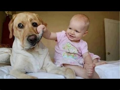 cute dogs and adorable babies compilation youtube funny videos babies laughing at dogs cute dog baby