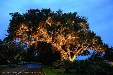 live oak lights live oak lights illuminating our heritage daniel island