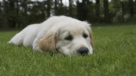 puppy runny diseases and symptoms archives dogzhealth health common illnesses