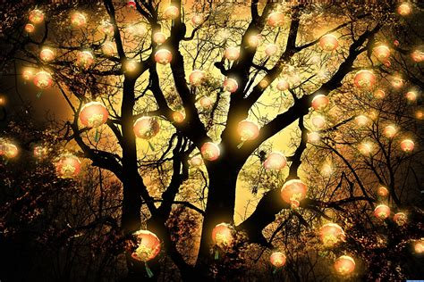 the lanterns tree picture by nellista for lanterns photoshop contest pxleyes com