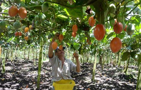 cuantas cadenas productivas hay en colombia agricultor hay cr 233 ditos para sus proyectos la patria