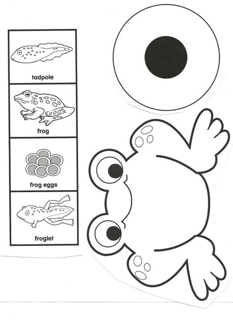 cycle of a cycle of a frog clipart clipartxtras