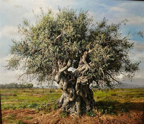 olive tree mediterranean plants possible request for walli