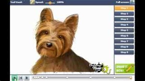 how to draw a yorkie easy how to draw baby yorkies