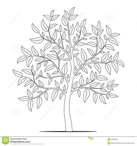 Tree Outline With Leaves by Tree With Leaves Outline On White Background Vector Stock Vector Image 84918846