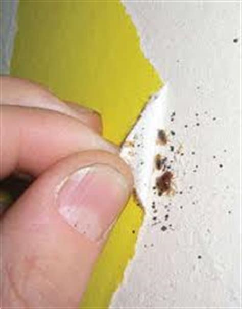 where do bed bugs hide on your body bedbug removal extermination professionals at your convenience bedbug me