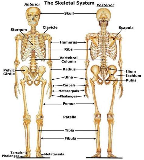 best 25 human body diagram ideas on pinterest the human