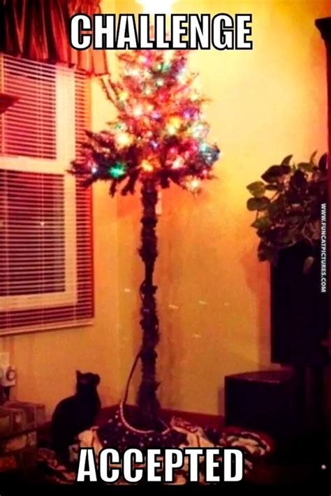 funny cats in christmas trees cat pictures