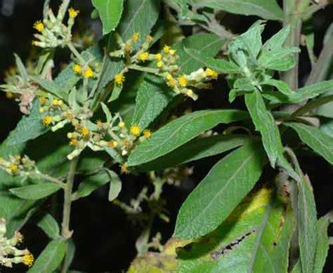 gambar flora  fauna indonesia alamendahs blog