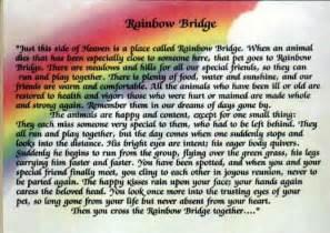 When a dog rescuer approaches the rainbow bridge
