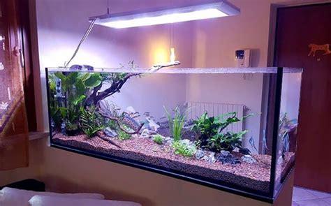 acquario casa acquario in casa dove collocarlo guida per casa