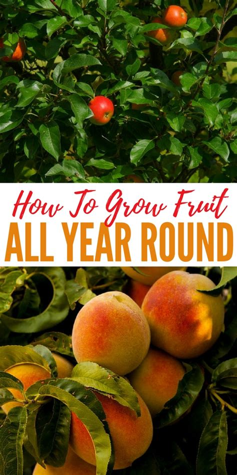 fruit 1 year how to grow fruit all year