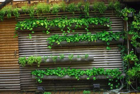 desain taman vertikal  tembok rumah rumah pantura