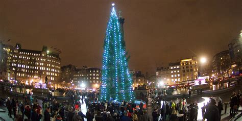 tree trafalgar square at trafalgar square city