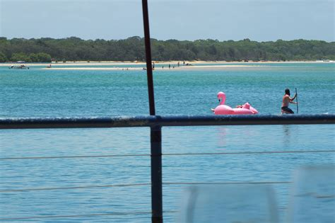 the boat shed cotton tree the boat shed restaurant sunshine coast