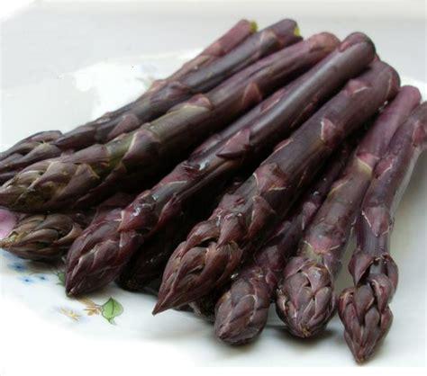 penanaman akar asparagus bibit tanaman asparagus putih