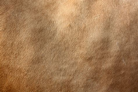 Cow Fur Texture | the gallery for gt cow fur texture