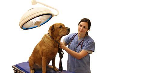 hospital dogs millis animal hospital and cat care in st louis missourimillis animal hospital