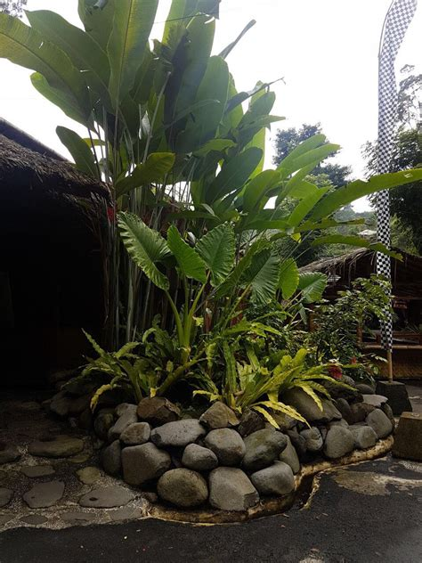 jual tanaman hias tukang taman minimalis