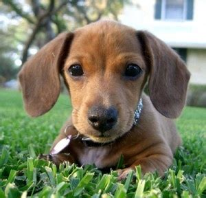 baby wiener baby wiener stare at and get happy