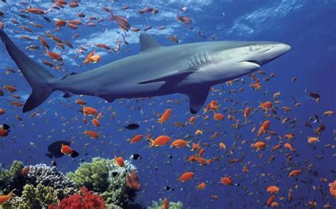 imagenes para fondo de pantalla de tiburones descargar la imagen en tel 233 fono animales agua mar