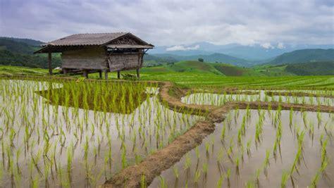 time lapse rice farm  nimbus floating  chiang mai