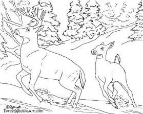 forest wildlife art 6 1 12 7 1 12
