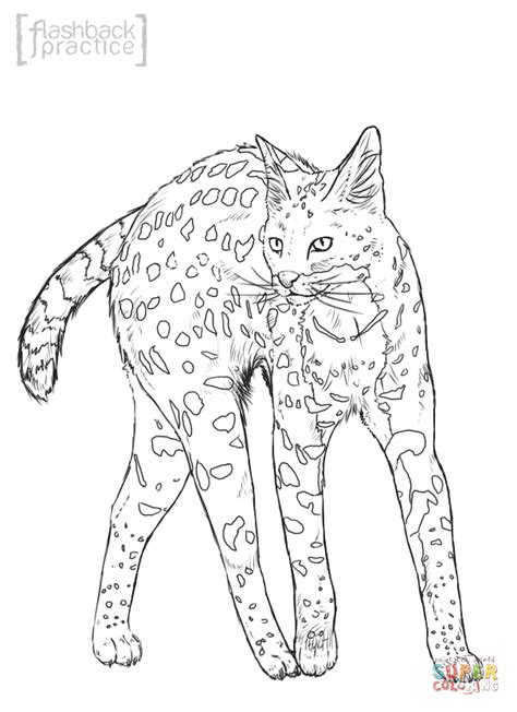 realistic serval coloring page  printable coloring pages
