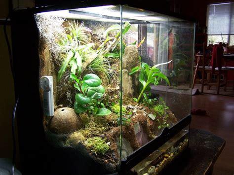 vivarium setup   build  rainforest terrarium step