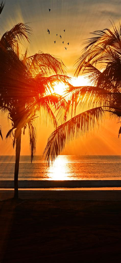 nl beach vacation summer night sunset red palm tree