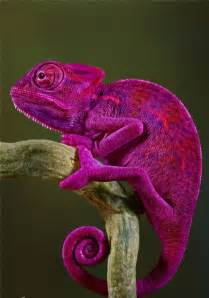 gecko change color 50 colorful animals photography inspiration photos