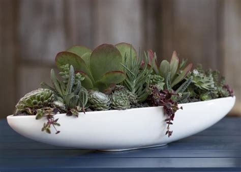 Shallow Planter For Succulents by Flora Grubb Tabletop Garden Succulents