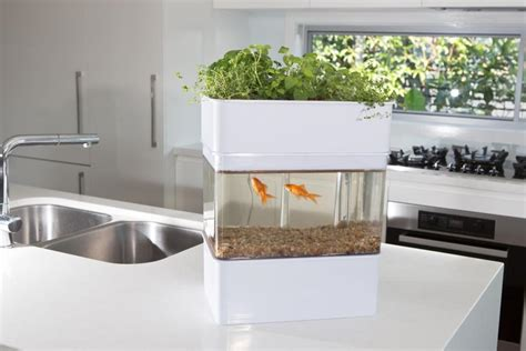 Where To Buy Herb Plants by Indoor Aquaponics Systems Aquaponicals
