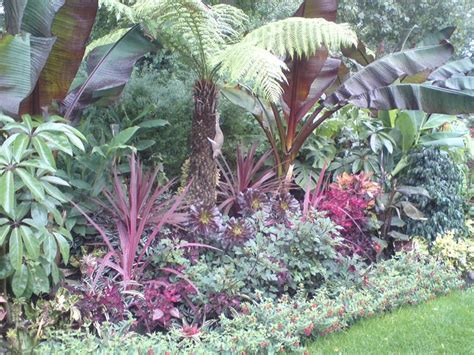tropical planting scheme 1000 images about jungle theme garden on