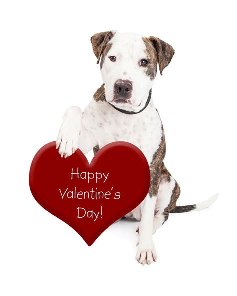 valentines puppy 10 ways to celebrate valentines day with your