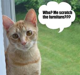 How To Get Cats To Stop Scratching Furniture by How To Stop Cats From Scratching Furniture