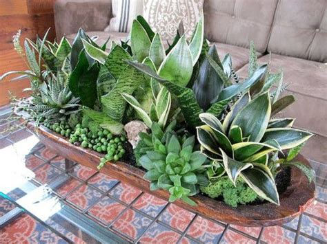 low light succulents low light succulent planter constrution party s for
