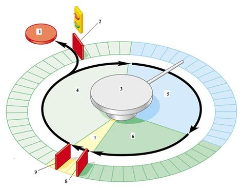 cell cycle diagram to label photufaniya new calendar template site
