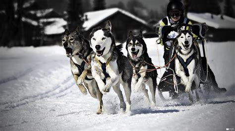 sled commands mushing explore 2012 02 14 frontpage website flickr