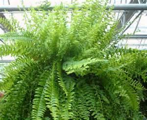 Likewise euphorbia cactus plant information on no light houseplants