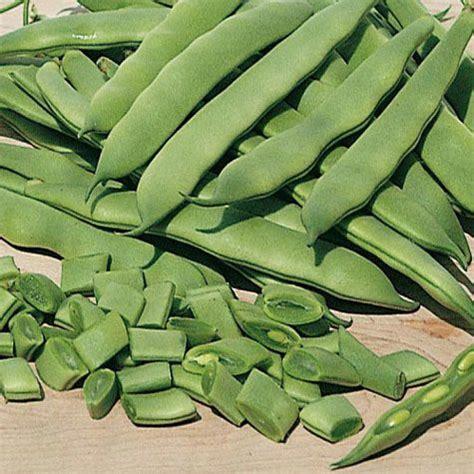 bush beans roma ii bush beans gurney s seed nursery co