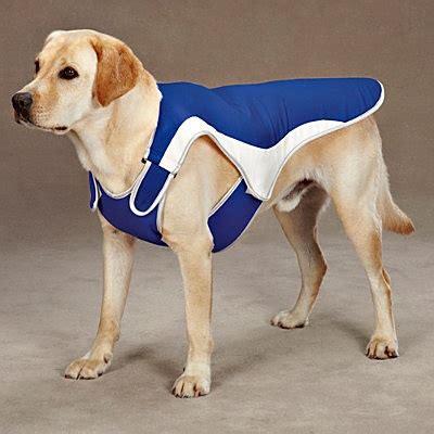 cooling vest for dogs cool pup cooling vest