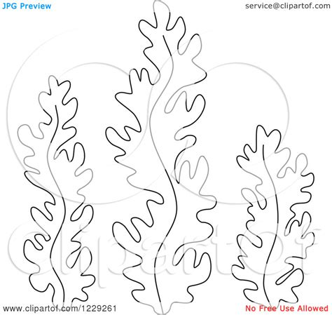 seaweed clipart coloring page pencil and in color